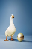 Goose Standing Beside Golden Egg, Studio Shot Photographie