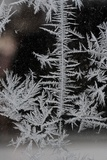 Ice Crystals on a Window in Winter Photo by Frank May