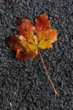 A Colourful Leaf Photo by Frank May
