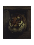Head of Tiger, C. 1860-1865 Prints by Francesco Hayez