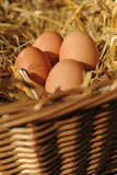 Organic, Eggs Prints