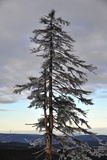 Winter on the Highest Harz Mountain, the Brocken Photo by Frank May