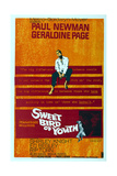 Sweet Bird of Youth, Paul Newman, 1962 Posters