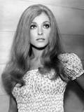 The Wrecking Crew, Sharon Tate, 1969 Photo