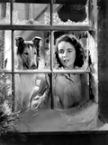 Courage of Lassie, Elizabeth Taylor, 1946 Fotografía