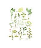 Herbs Giclee Print by Lucile Prache