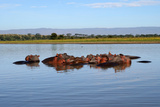 Hippos in a River Photographic Print by  jcg_oida
