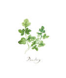 Parsley Giclee Print by Lucile Prache