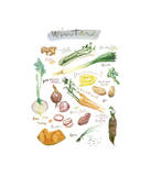 Winter Vegetables Giclee Print by Lucile Prache