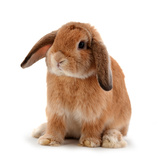 Rabbit Isolated on a White Background Papier Photo par  evegenesis