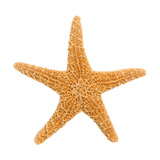 Sugar Starfish Photographic Print by Springfield Gallery