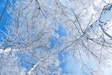 Tops of Trees against the Sky Lámina fotográfica por Alexandr Vasilyev