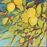 The Lemons Above Stretched Canvas Print by Jennifer Lommers