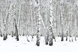 Winter Forest Papier Photo par  rufar