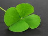 Clover Leaf on Gray Surface Photographic Print by  Swapan