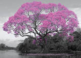 Tree - Blossom - Afiş