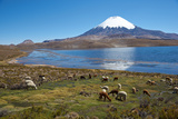 Parinacota Volcano Fotografisk tryk af  JeremyRichards