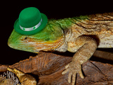 Green Hat Leprechaun Lizard. Photographic Print by  W Scott