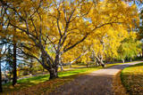 Peaceful Park with Autumn Colors in Trees Photographic Print by  Juhku