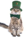 Cute St. Patrick's Day Cat Reprodukcja zdjęcia autor VJ