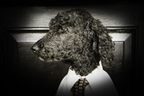 Dapper Dog - Poodle Dressed up in Menswear Photographic Print by Erin Cadigan