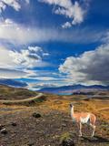 The Lama Photographic Print by Kushnirov Avraham
