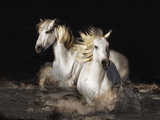 Camargue Horses Posters by Bobbie Goodrich