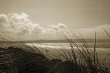 Summer Grasses Impression giclée par Malcolm Sanders