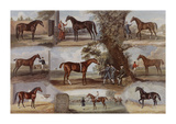 Fathers of the Turf, 1683-1822 Premium Giclee Print by John Beer