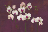 Orchid Dance Giclee Print by Mimi Roberts