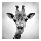 Giraffe Kunst