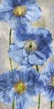 Poppy Splendour II Giclee Print by Tania Bello