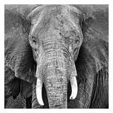Elephant Kunst