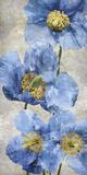 Poppy Splendour I Giclee Print by Tania Bello