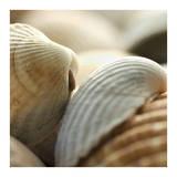 Shells 4 Prints