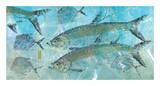 Tarpon Lagoon Posters by Jim Roberts