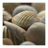 Shells 2 Prints