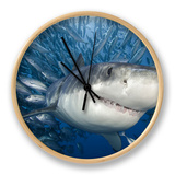 Great White Shark (Carcharodon Carcharias) Swimming Through a School of Smaller Fish Clock by David Fleetham
