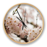 Cherry Blossums (Sakura) on Mount Hakodate Clock by Shayne Hill