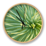 Motion Blur of Yucca Plant at Jc Raulston Arboretum in Raleigh, North Carolina Clock by Melissa Southern