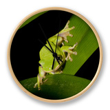 American Tree Frog in a Garden in Fuquay Varina, North Carolina Clock by Melissa Southern