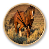 Mustang / Wild Horse, Chestnut Stallion Walking, Wyoming, USA Adobe Town Hma Clock by Carol Walker