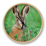 European Brown Hare Juvenile in Field, Lake Neusiedl, Austria Clock by Rolf Nussbaumer