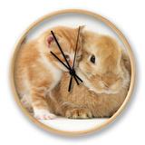 Domestic Kitten (Felis Catus) Next to Bunny, Domestic Rabbit Clock by Jane Burton