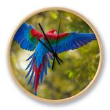 The Parrot Ur af Art Wolfe