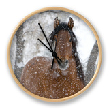Bay Andalusian Stallion Portrait with Falling Snow, Longmont, Colorado, USA Clock by Carol Walker