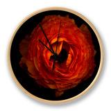 Ranunculus Orange 2 Ur af Magda Indigo
