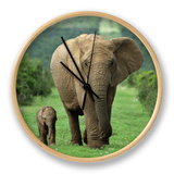 Mother and Calf, African Elephant (Loxodonta Africana), Addo National Park, South Africa, Africa Clock by Ann & Steve Toon