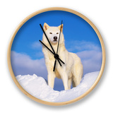 Arctic Grey Wolf in Snow, Idaho, USA Clock by Tom Vezo