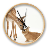 Fallow Deer (Dama Dama) Fawn and Sandy Netherland-Cross Rabbit Clock by Mark Taylor